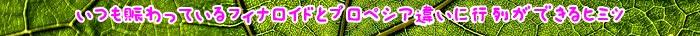 フィナロイド,効果,AGA,プロペシア,通販,治療,薬,ミノキシジル,医薬品,購入,肝臓,服用,副作用,場合,販売,タブレット,使用,改善,薄毛,フィナステリド,期待,機能,商品,個人輸入,必要,医師,口コミ,処方,ジェネリック医薬品,フィンペシア,g,海外,負担,抜け毛,オオサカ,堂,クリニック,利用,併用,偽造,確認,代謝,髪,実感,ALT,有名,状態,髪の毛,量,ケース,